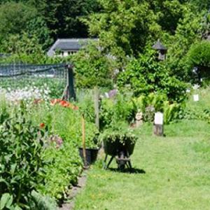 Zelfoogsttuin Kraaybeekerhof
